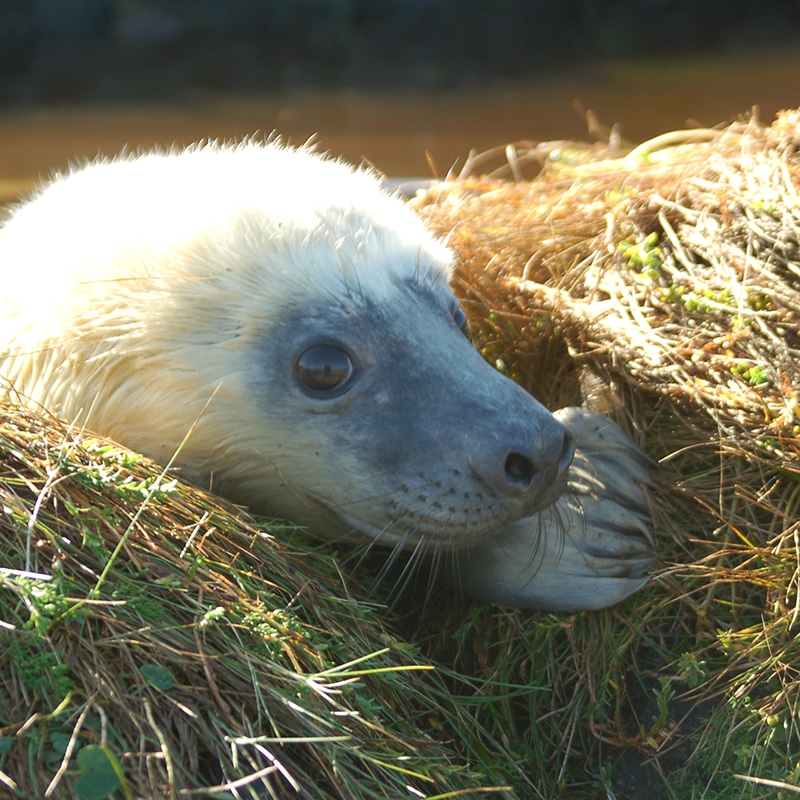 baby seal on west coast explorer highland tour